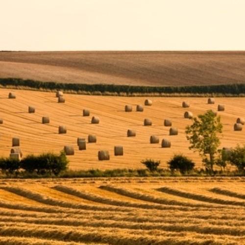 Potencjał inwestycyjny w rolnictwie
