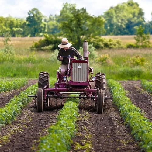 1 września zacznie działać Krajowy Ośrodek Wsparcia Rolnictwa