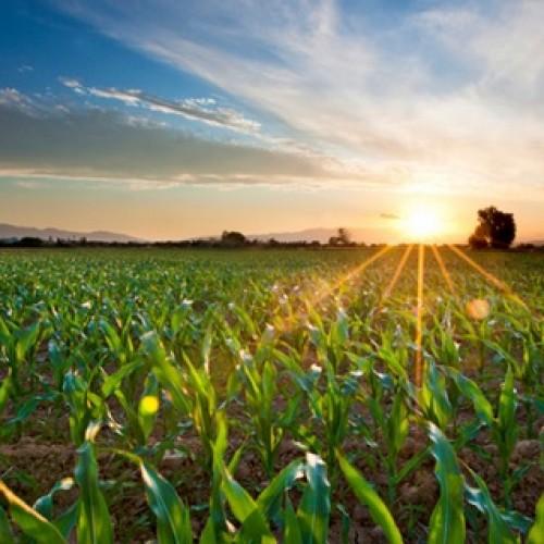 Tylko największe polskie gospodarstwa rolne są w stanie konkurować z zachodnimi. Stanowią one zaledwie 2 proc. ogółuTylko największe polskie gospodarstwa rolne są w stanie konkurować z zachodnimi. Stanowią one zaledwie 2 proc. ogółu