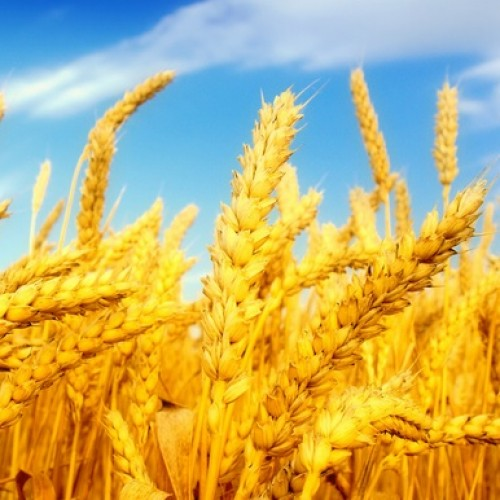 Europejska polityka rolna do poprawki