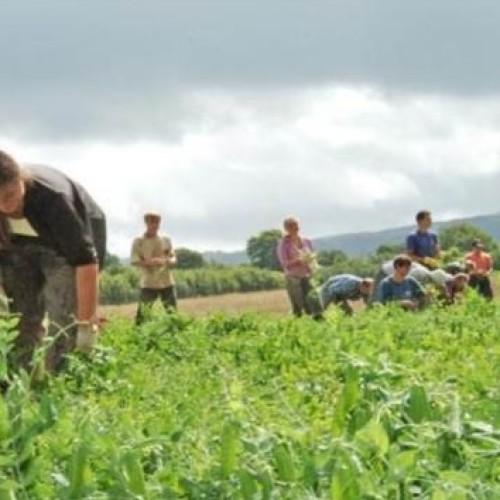 Rolnictwo, ogrodnictwo i turystyka czekają na wdrożenie dyrektywy o pracownikach sezonowych