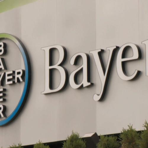 Bayer dzieli się by rosnąć
