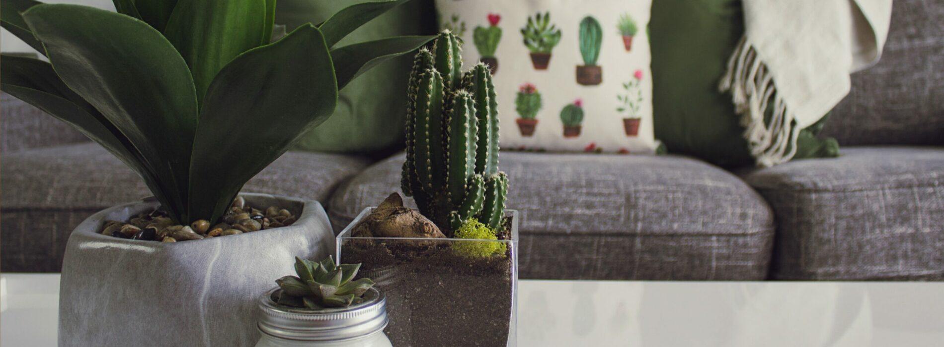 Poznaj niewymagające rośliny do twojego domu